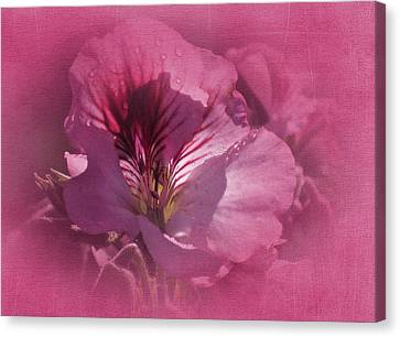 Macro Geranium Flower Canvas Print - Vintage Geranium by Richard Cummings