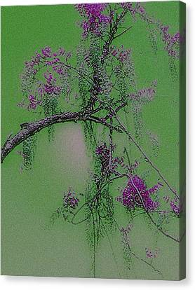 Canvas Print featuring the photograph Wisteria by Holly Martinson