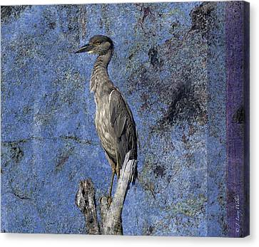 Yellow-crowned Night Heron Canvas Print by J Larry Walker