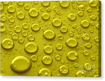Yellow Water Drops Canvas Print by Blink Images