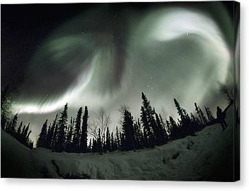 Aurora Borealis Canvas Print by Chris Madeley