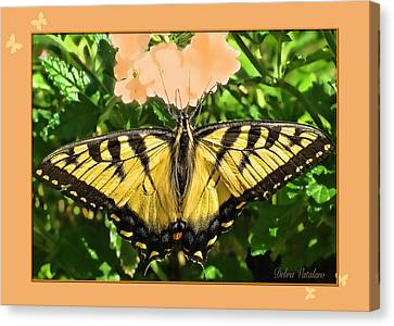 Butterfly Collection Canvas Print by Debra     Vatalaro
