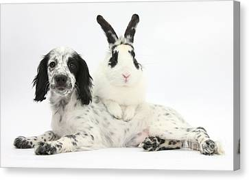Puppy And Rabbit Canvas Print by Mark Taylor