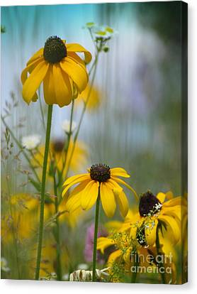 Wildflowers Canvas Print by France Laliberte