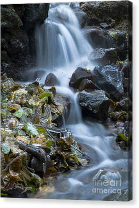 Waterfall Canvas Print by Odon Czintos