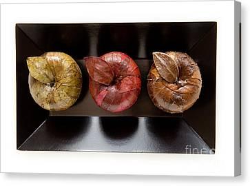 3 Apples Canvas Print by Igor Kislev