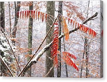 Autumn Snow Monongahela National Forest Canvas Print by Thomas R Fletcher