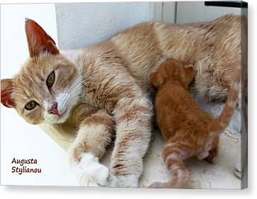 Cat Maternity Canvas Print by Augusta Stylianou