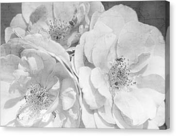 3 Cracked Roses Bland And White Canvas Print