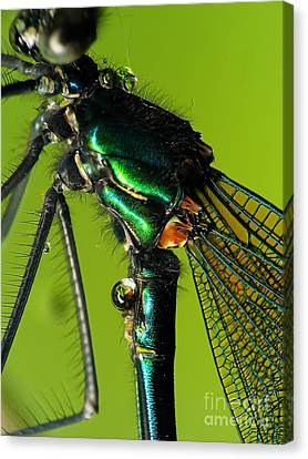 Dragonfly In Drops Canvas Print by Odon Czintos
