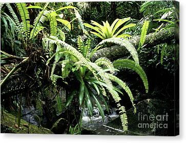 El Yunque National Forest Canvas Print