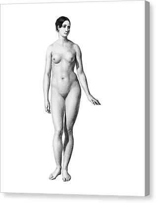 Female Nude, Artwork Canvas Print