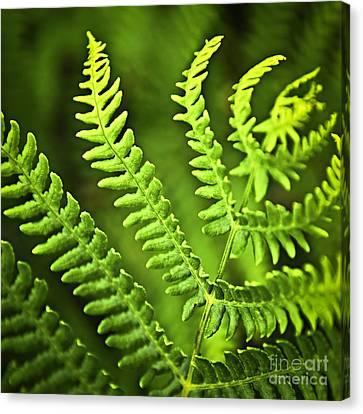Fern Leaf Canvas Print by Elena Elisseeva