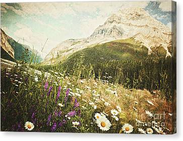 Field Of Daisies And Wild Flowers Canvas Print by Sandra Cunningham