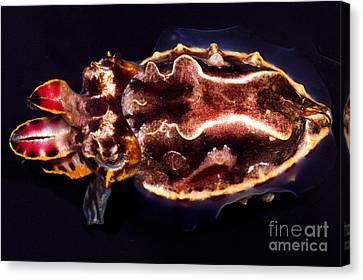 Flamboyant Cuttlefish Canvas Print by Dante Fenolio