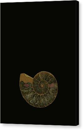 Fossilized Sea And Marine Shells Or Canvas Print