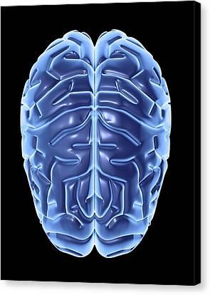 Human Brain, Artwork Canvas Print by Pasieka