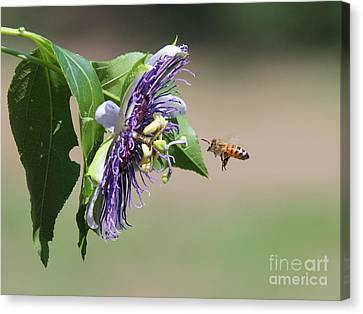 Insects Canvas Print by Jack R Brock