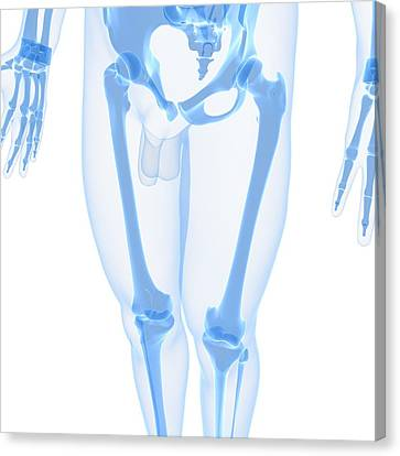 Leg Bones, Artwork Canvas Print by Sciepro