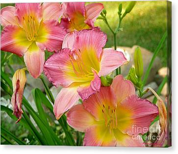 3 Lillies Canvas Print