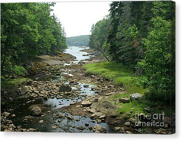 Low Tide In Maine Part Of A Series Canvas Print by Ted Kinsman