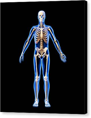 Male Skeleton, Artwork Canvas Print by Roger Harris