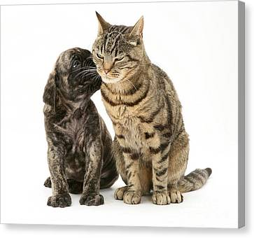 Puppy And Cat Canvas Print by Jane Burton