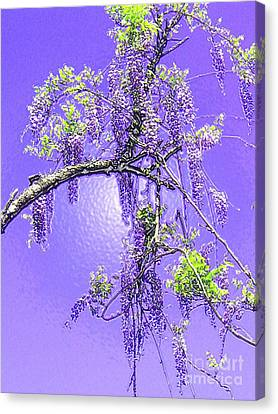 Canvas Print featuring the photograph Purple Passion Wisteria by Holly Martinson