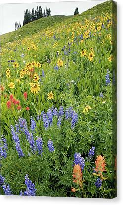 Summer Mountain Flowers Canvas Print by Bob Gibbons