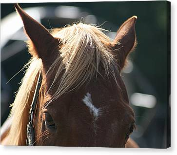 The Beauty Of The Horses Canvas Print by Valia Bradshaw