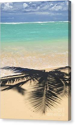 Tropical Beach Canvas Print by Elena Elisseeva