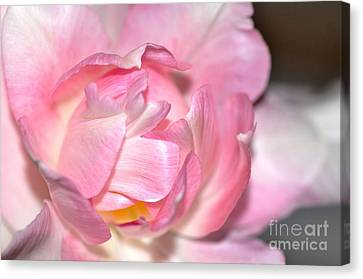 Canvas Print featuring the photograph Tulipe by Sylvie Leandre