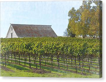Vineyard With Old Barn Canvas Print by Brandon Bourdages