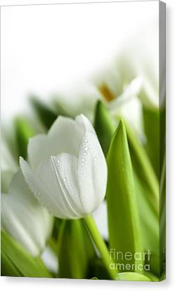 White Tulips Canvas Print by Nailia Schwarz