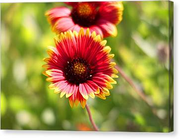 Canvas Print featuring the photograph Wild Flower by Jeanne Andrews
