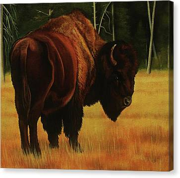 Yellowstone Bison Canvas Print by Lucy Deane