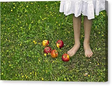 Apples Canvas Print by Joana Kruse