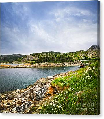 Atlantic Coast In Newfoundland Canvas Print by Elena Elisseeva