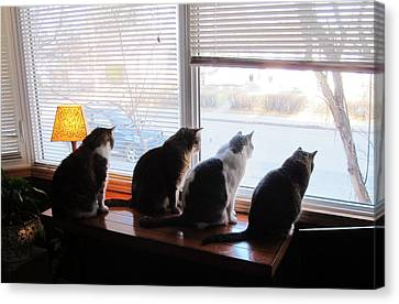 4 Cats Spot Bird Through Window Canvas Print by Andy Hodgson