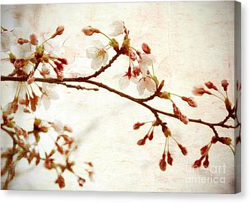 Cherry Blossoms Canvas Print by Charline Xia