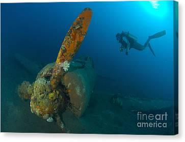 Diver Explores The Wreck Canvas Print by Steve Jones
