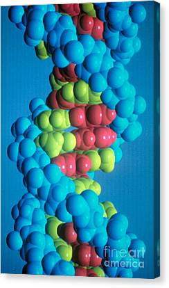 Dna Canvas Print by Science Source