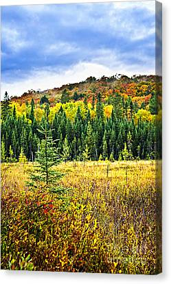 Wet Leaves Canvas Print - Fall Forest by Elena Elisseeva