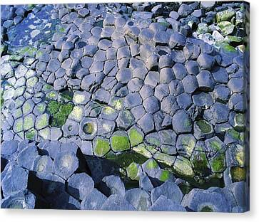 Giants Causeway, Co Antrim, Ireland Canvas Print by The Irish Image Collection