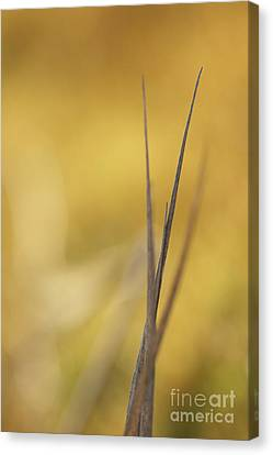 Leaf Canvas Print by Odon Czintos