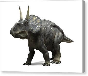 Nedoceratops Dinosaur, Artwork Canvas Print by Sciepro