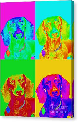 Pop Art Dachshund Canvas Print by Renae Laughner