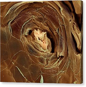Sweat Pore, Sem Canvas Print by Steve Gschmeissner