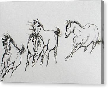 4 Wild Horses  Canvas Print