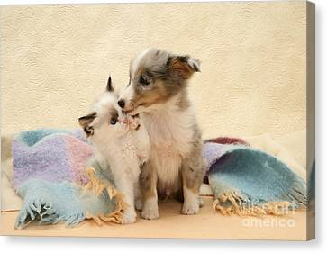 Kitten And Pup Canvas Print by Jane Burton